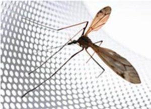 картинка комарик